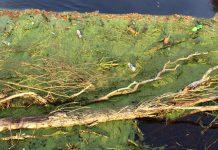 Rzeka Obra w Międzyrzeczu