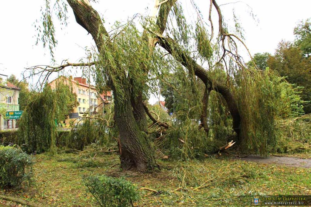 Międzyrzecz po przejściu Orkanu Ksawery