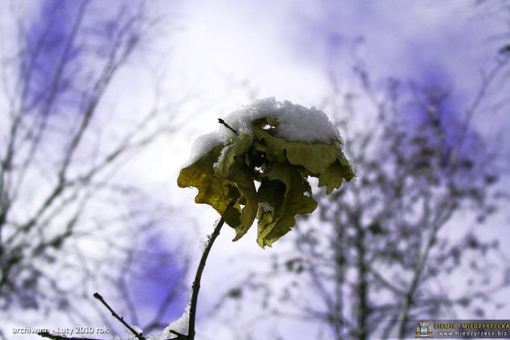 Międzyrzecz - zima w lutym 2010 roku
