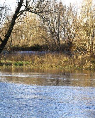 Międzyrzecz: Poziom wody w Obrze powyżej stanu alarmowego!