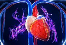 Głośne TAK dla transplantacji