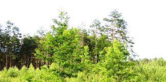 Międzynarodowy Dzień Lasu