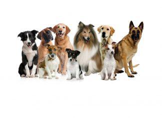 Czipowanie psów w gminie Międzyrzecz