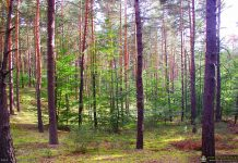 Wspólne sadzenie lasu dla upamiętnienia Setnej Rocznicy Odzyskania Niepodległości Rzeczypospolitej Polskiej