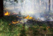 Zagrożenie pożarowe lasów