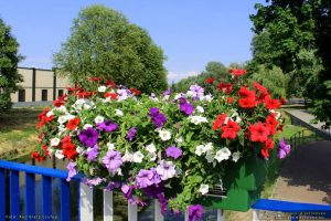 Kwiaty w Międzyrzeczu