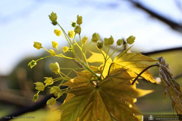 Wiosennie w Międzyrzeczu