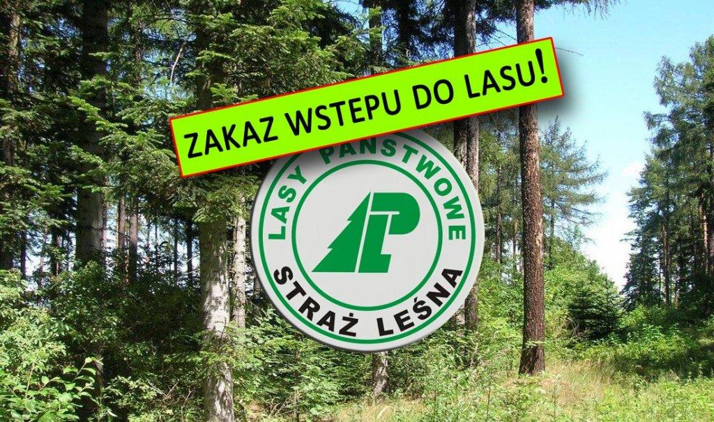 MIĘDZYRZECZ: Koronawirus. Lasy Państwowe wprowadzają tymczasowy zakaz wstępu  do lasów | MIĘDZYRZECZ