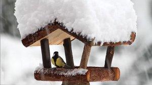 Dokarmianie Ptakow Zima 001