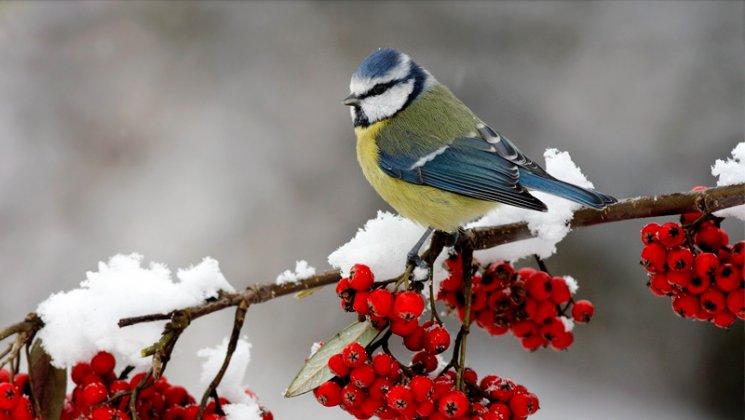 Dokarmianie Ptakow Zima 003