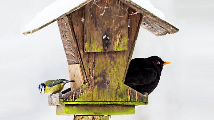 Dokarmianie Ptakow Zima 005
