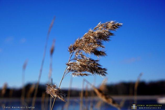 Jezioro Glebokie 2021 13
