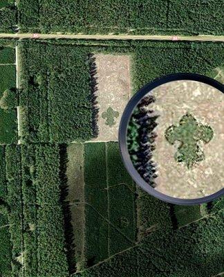 las w kształcie lilijki skwierzyna 000