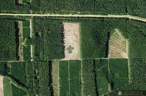 las w kształcie lilijki skwierzyna 001