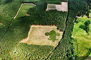 las w kształcie lilijki słocina 004