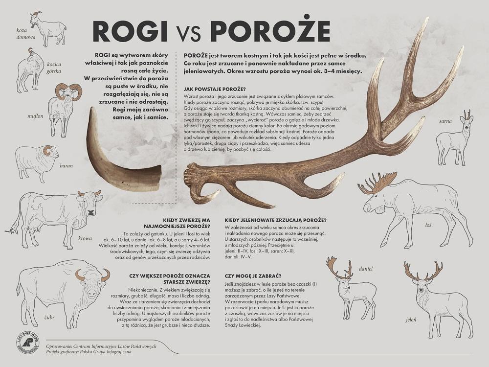 rogi vs poroze
