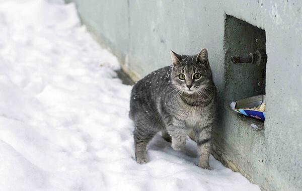 Zwierzęta Zimą 001