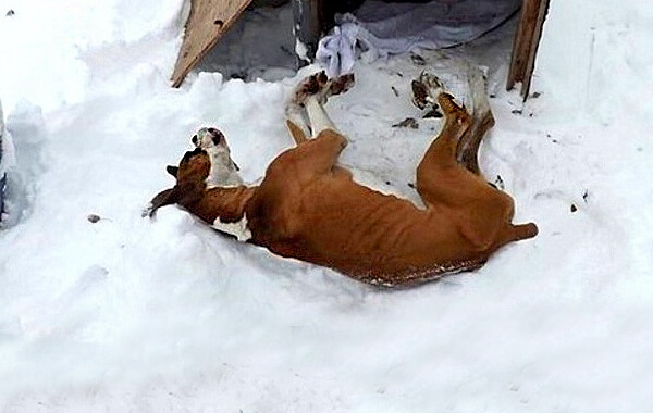 Zwierzęta Zimą 002