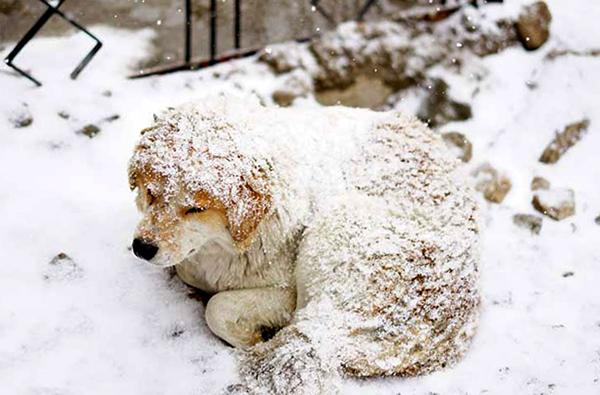 Zwierzęta Zimą 003