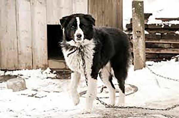 Zwierzęta Zimą 004