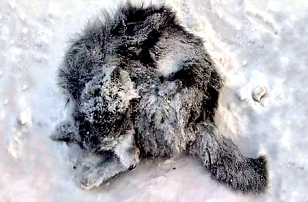Zwierzęta Zimą 006