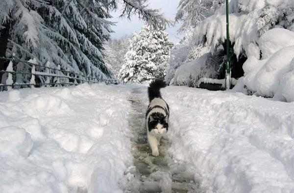 Zwierzęta Zimą 008