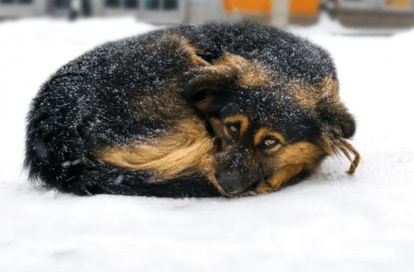 Zwierzęta Zimą 010