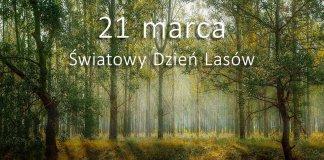 Światowy dzień lasów 000