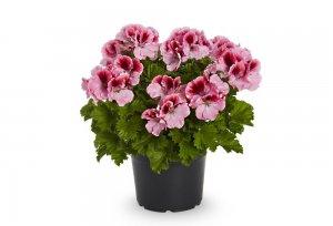 2021 geraniums 4010 diy marbled nail polish planters 08