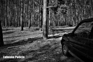 dzieci w lesie 001