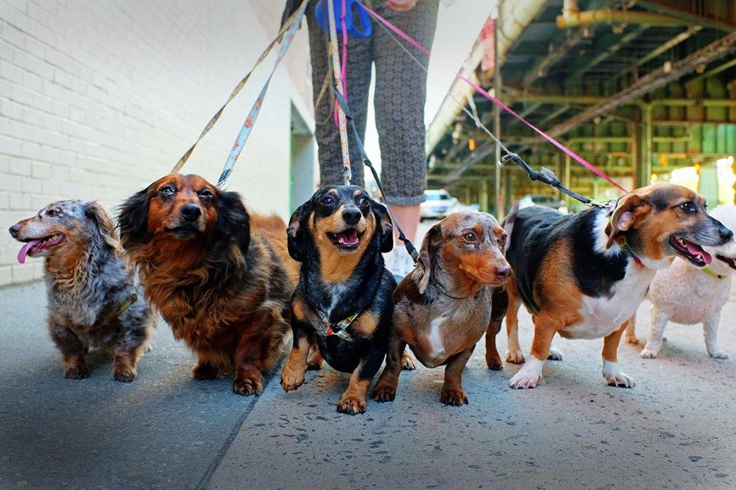 pies na smyczy 000