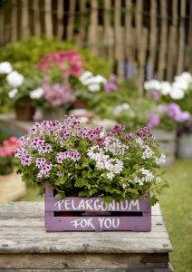 2021 geraniums 3000 colourful get together garden 01