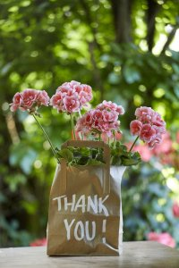 2021 geraniums 3000 colourful get together garden 03
