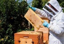 dla rodzin pszczelich lubuskie 000