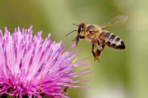 dla rodzin pszczelich lubuskie 001