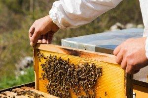 dla rodzin pszczelich lubuskie 002