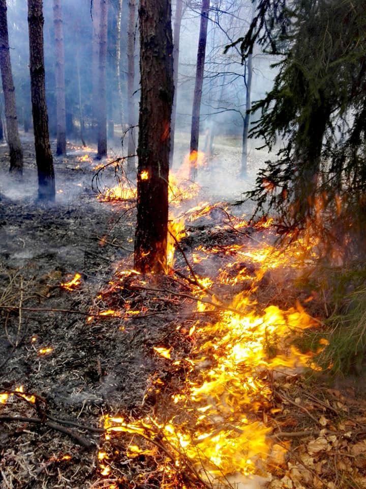 zagrozenie pożarowe w lasach 003