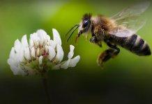 dzień pszczoły 000