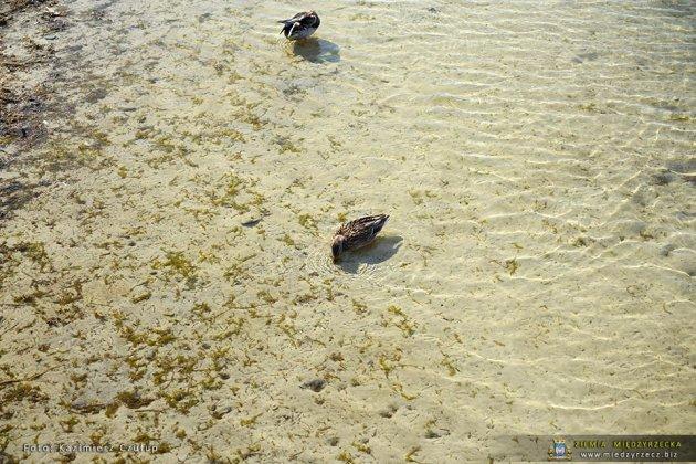 jezioro głębokie jesienią 020