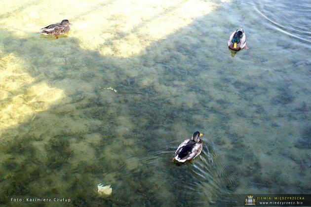 jezioro głębokie jesienią 021
