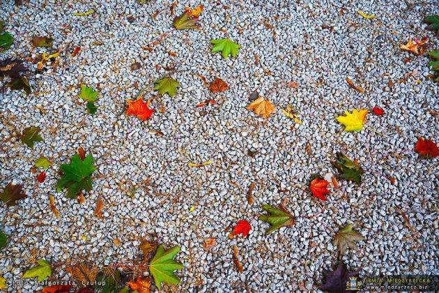 jezioro głębokie jesienią 051